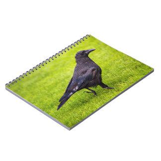 Cuaderno Cuervo negro