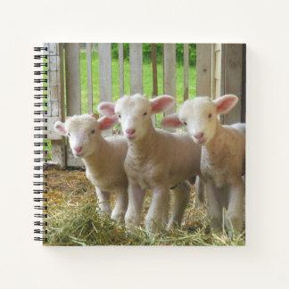 Cuaderno de las ovejas