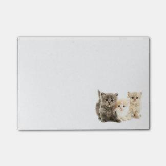 Cuaderno de notas del gatito