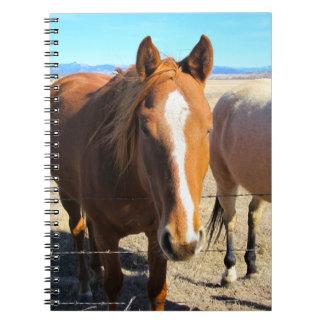 Cuaderno del caballo