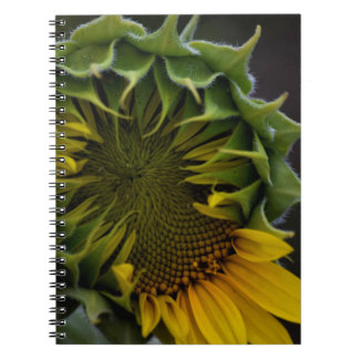 Cuaderno Cuaderno del girasol