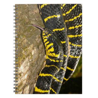 Cuaderno Dendrophila de Boiga o serpiente del mangle