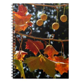 Cuaderno/diario personal - sicómoro y caída libreta