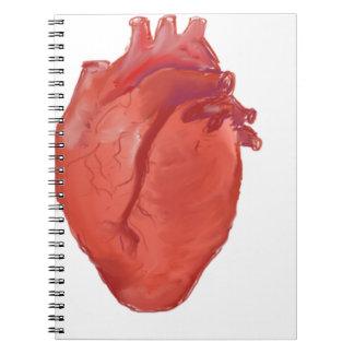 Cuaderno Diseño de la anatomía del corazón