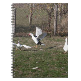 Cuaderno El luchar de los gansos