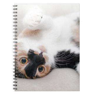 Cuaderno gato