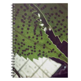Cuaderno helecho