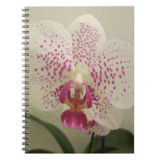 Cuaderno La púrpura de la orquídea salpica
