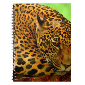Cuaderno Leopardo en el registro de Brown