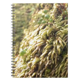Cuaderno Musgo y mostos soleados