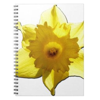 Cuaderno Narciso 1,0 de la trompeta amarilla