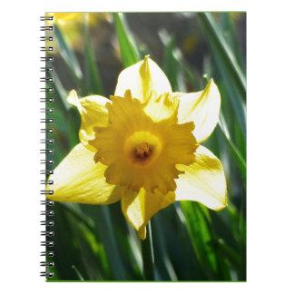 Cuaderno Narciso amarillo 03.0.g