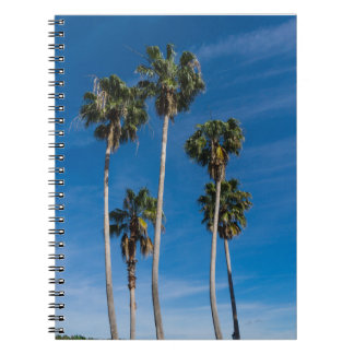 Cuaderno Palmas que curvan altas