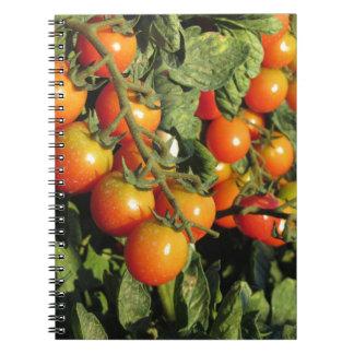 Cuaderno Plantas de tomate que crecen en el jardín