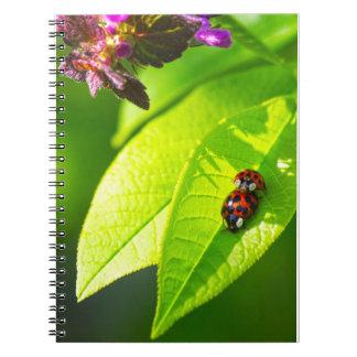 Cuaderno Proa de lady Love