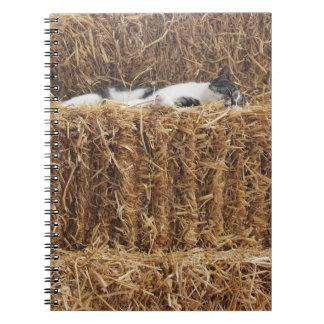 Cuaderno Siesta del gato de la tarde