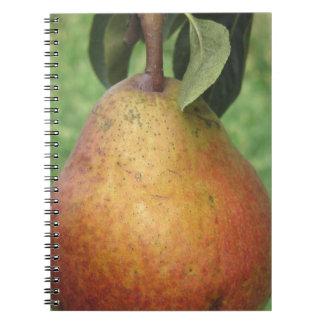 Cuaderno Sola pera roja que cuelga en el árbol