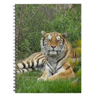 Cuaderno Tigre