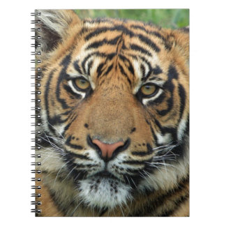 Cuaderno Tigre adulto