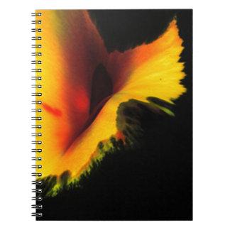 Cuaderno Tintas chinas sobre papel secante +infografía