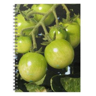 Cuaderno Tomates verdes que cuelgan en la planta en el