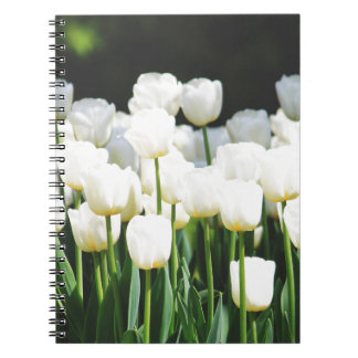 Cuaderno White Tulip