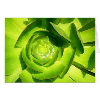 Cuadrado suculento verde del Amy Vangsgard Tarjeta