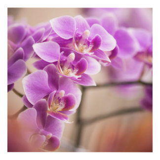 Cuadro Cadena de flor de color rosa oscuro de la orquídea