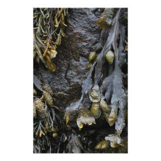 Cuadro de la alga marina tarjeton