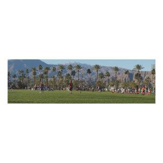 Cuadro Palmeras y campos de LaCrosse