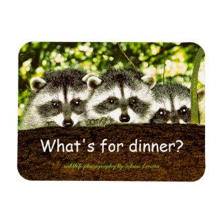 ¿Cuál está para la cena? Imán del refrigerador del