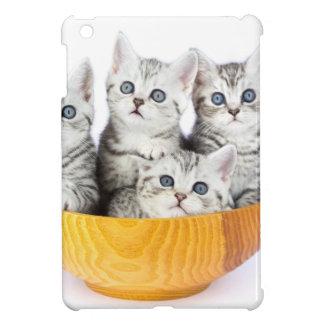 Cuatro gatos jovenes que se sientan en cuenco de