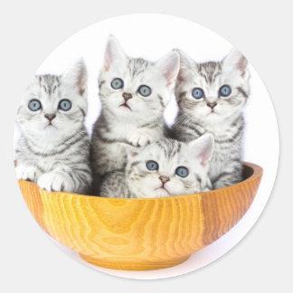 Cuatro gatos jovenes que se sientan en cuenco de pegatina redonda