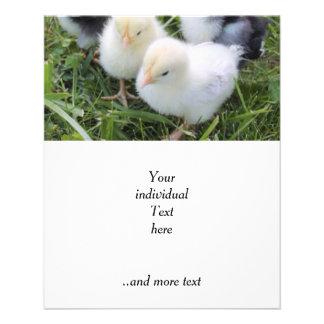 cuatro polluelos preciosos folleto 11,4 x 14,2 cm