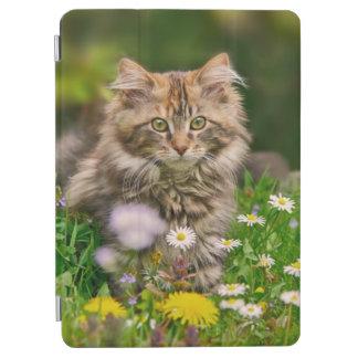 Cubierta De iPad Air Gato mullido lindo del gatito del Coon de Maine en