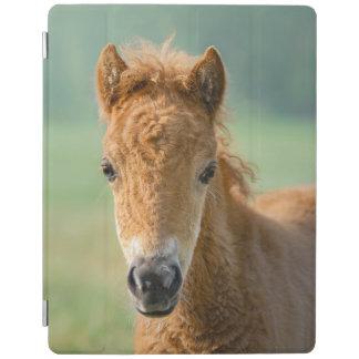 Cubierta De iPad Foto linda del frontal de la cabeza de caballo del