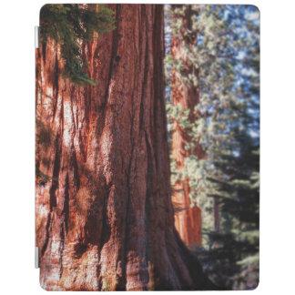 Cubierta elegante de Ipad de las secoyas gigantes Cubierta De iPad