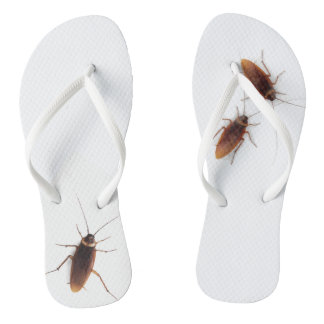 Cucaracha Chanclas