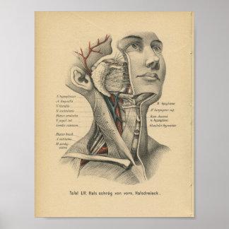 Cuello de la cabeza de impresión de la anatomía