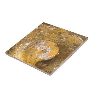 Cuenco tallado hecho de fósiles en foto del primer azulejo
