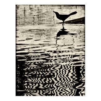 Cuervo con la reflexión en el agua - postal