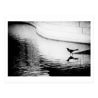 Cuervo negro con la reflexión en el agua - foto postal