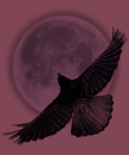 Cuervo negro que vuela que abraza la camisa de la