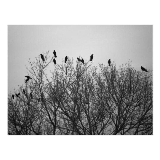 Cuervos en el Top del árbol Postal
