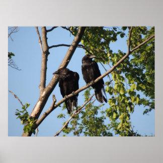 Cuervos Póster
