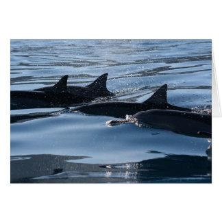 Cumpleaños del delfín tarjeta de felicitación