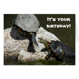 Cumpleaños divertido de la foto de las tortugas tarjeta de felicitación