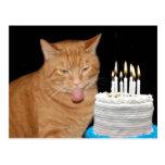 Cumpleaños divertido del gato postales