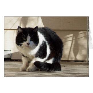 Cumpleaños, gato negro del blanco de N Tarjeta