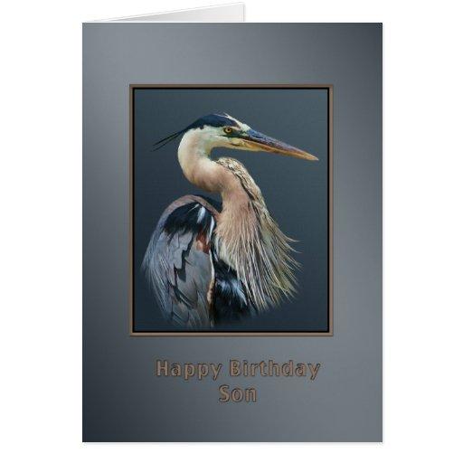 Cumpleaños, hijo, pájaro de la garza de gran azul, felicitaciones